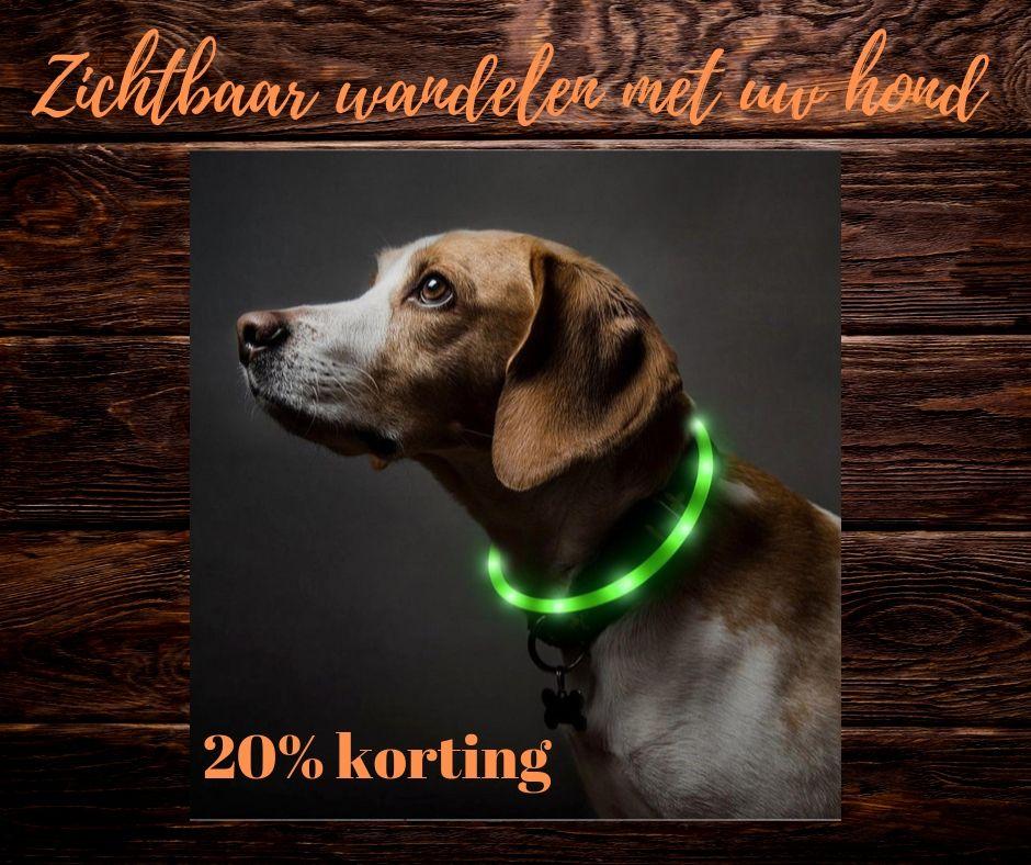 Zichtbaar wandelen met je hond in het donker.